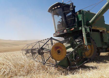 سال زراعی آینده ۷۰۰ هزار تن گندم از مزارع آذربایجانشرقی برداشت میشود
