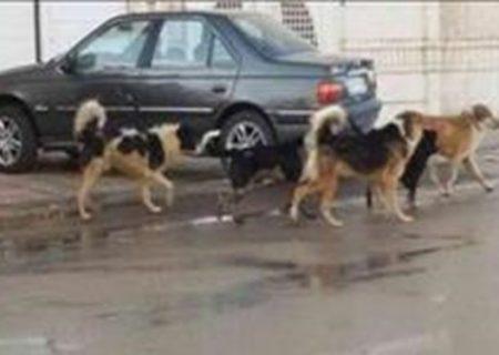 رژه سگ های ولگرد روی اعصاب مردم
