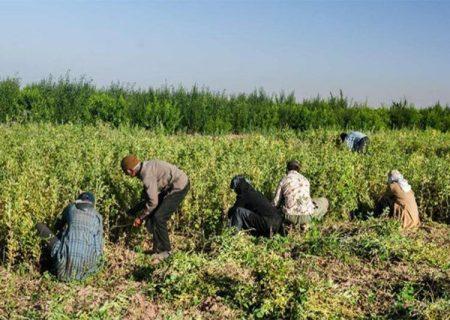 سند اشتغال در ۵ روستای آذربایجانشرقی در حال اجراست