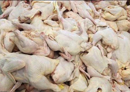 کاهش وزن مرغها در نتیجه کمبود نهاده
