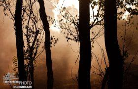 تولید ذغال در باغات اسفهلان