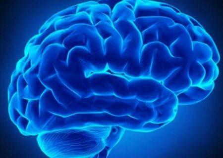 حفظ روابط اجتماعی موجب افزایش ماده خاکستری مغز می شود
