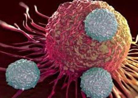 افزایش ۱۰ درصدی خطر مرگ با هر ماه تاخیر در روند درمان سرطان