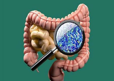 باکتری های روده به بازسازی سیستم ایمنی بدن کمک می کنند