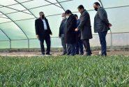 ۲۰۰ هکتار گلخانه در آذربایجانشرقی به بهرهبرداری میرسد