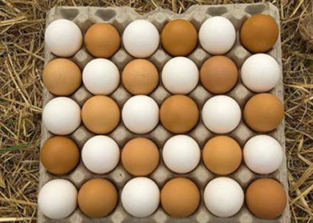 کمبود تخم مرغ در آذربایجان شرقی وجود ندارد