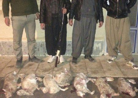 تعداد خرگوشهای شکار شده در زنجان به ۲۵ سر رسید
