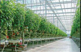 وسعت گلخانههای آذربایجانشرقی ۲ برابر میشود