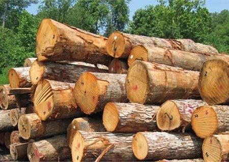 کشف و ضبط ۲۴ تن قطعات چوب درختان جنگلی در کلیبر
