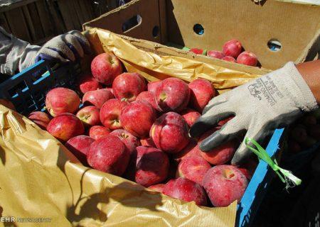 لزوم تسریع در صادرات سیب درختی با اجرایی شدن واردات موز به کشور
