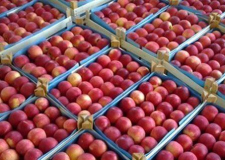 روند صادرات سیب آذربایجان غربی کند شده است