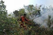 افزایش سرعت اطفای حریق جنگلها با سیستم «فایرفایتینگ»