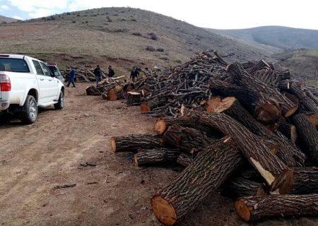 کشف ۳۰ تُن چوب قاچاق در مهاباد