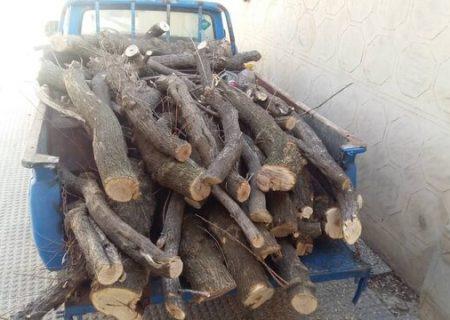 توقیف خودرو حامل درختان گز تالابی در ملکان