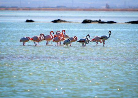 ابَرپروژه نجات دریاچه ارومیه در حال اجراست