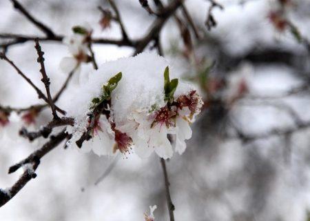 توصیههایی برای جلوگیری از خسارت درختان در معرض سرمای دیررس بهاره