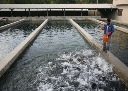 رشد امنیت غذایی آذربایجانشرقی با افزایش ۹۰ درصدی سرانه مصرف ماهی