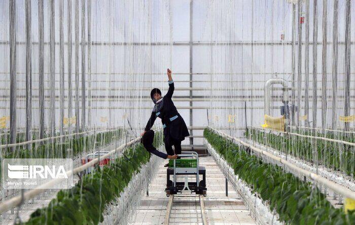 سرمایه گذاری ۲۵۰۰ میلیارد تومانی برای توسعه گلخانههای آذربایجانشرقی
