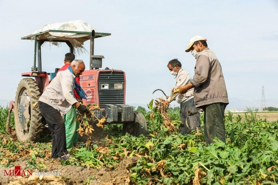خسارت بیش از ۱۰ هزار میلیارد ریالی بخش کشاورزی آذربایجان شرقی در سال جدید