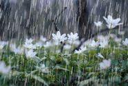 سامانه بارشی جدید عصر پنجشنبه وارد کشور میشود