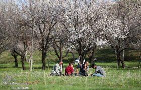 طبیعت بهاری روستای گلجار مرند