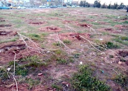 ۵۰۰ اصله درخت در روز روشن قلع و قمع شد
