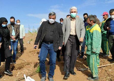 گسترش فضای سبز مرکز دفن پسماندهای شهرداری تبریز/ افزایش همکاری متقابل با سازمان سیما، منظر