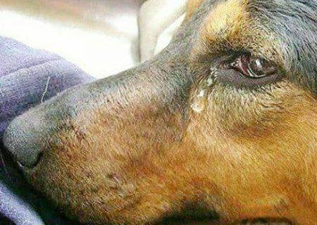 سگهای ایران هم بدبخت هستند!