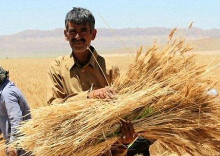 خرید تضمینی بیش از ۱۲۴ هزار تن گندم در استان اردبیل