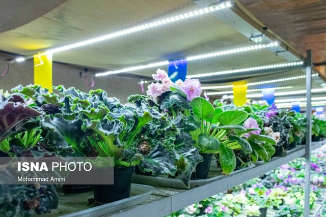 پرورش گیاهان لوکس؛ تجارتی پرسود اما وابسته به تخصص