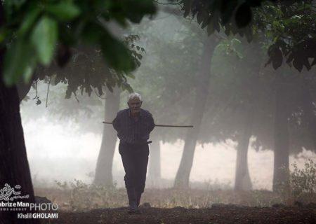درختان مه آلود مکیدی