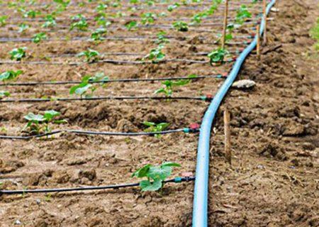 آبیاری کم فشار در ۱۲۵۰ هکتار از زمینهای کشاورزی تبریز
