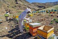 حدود ۷۰ درصد عسل مراغه صادر میشود