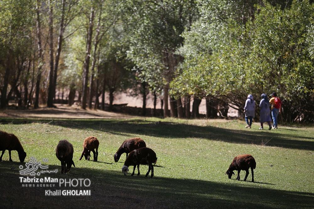 چوپانان روستاهای مرند