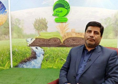 افزایش۵۰ درصدی نرخ خرید تضمینی گندم و ۳۶درصدی کلزا برای سال زراعی جدید