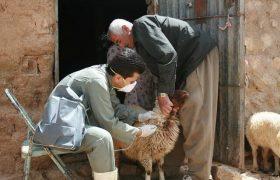 موردی از طاعون در آذربایجان شرقی گزارش نشده است