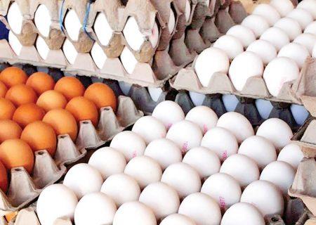 عرضه گسترده تخممرغ به نرخ شانهای ۴۲ هزارو ۵۰۰ تومان از امروز